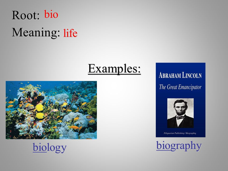 Root:bio Meaning: life Examples: biology biography