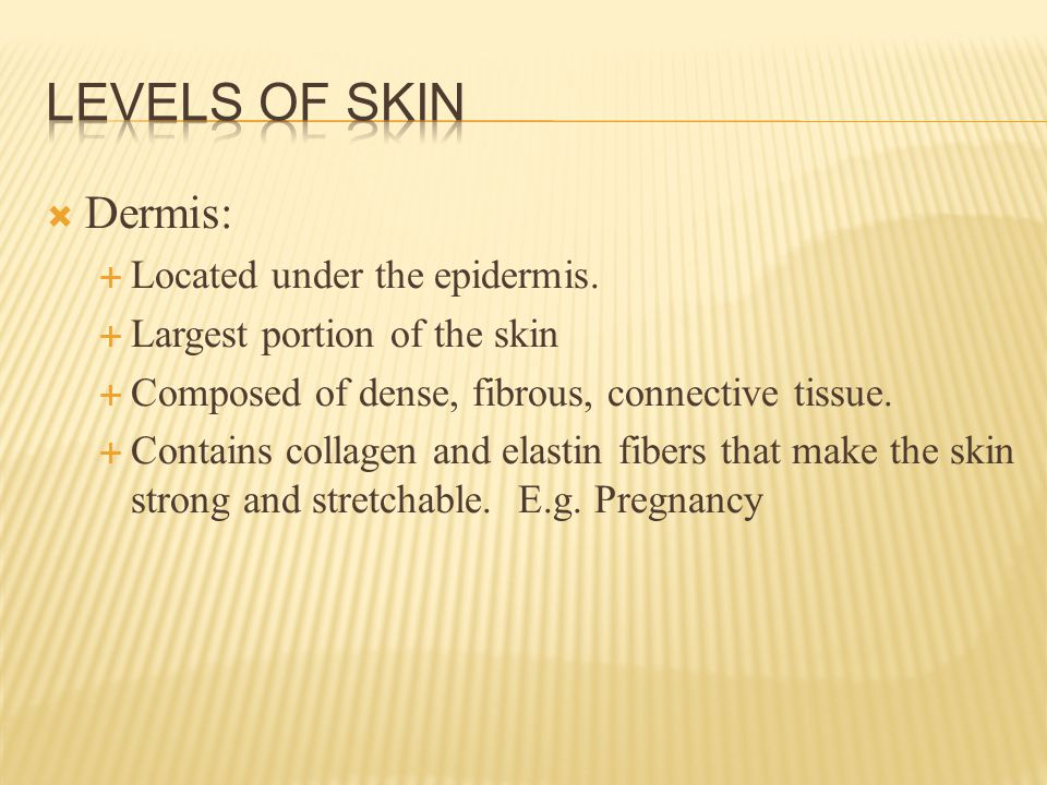  Dermis:  Located under the epidermis.