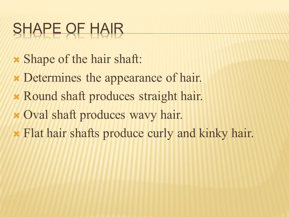  Shape of the hair shaft:  Determines the appearance of hair.