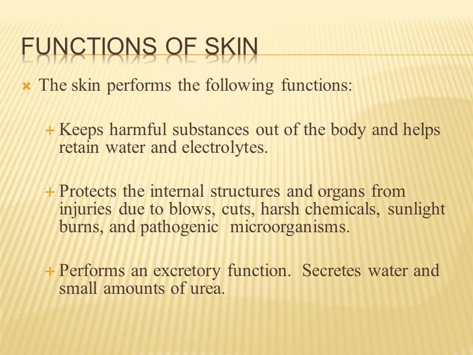  Function:  Sebum lubricates and helps waterproof skin and hair.