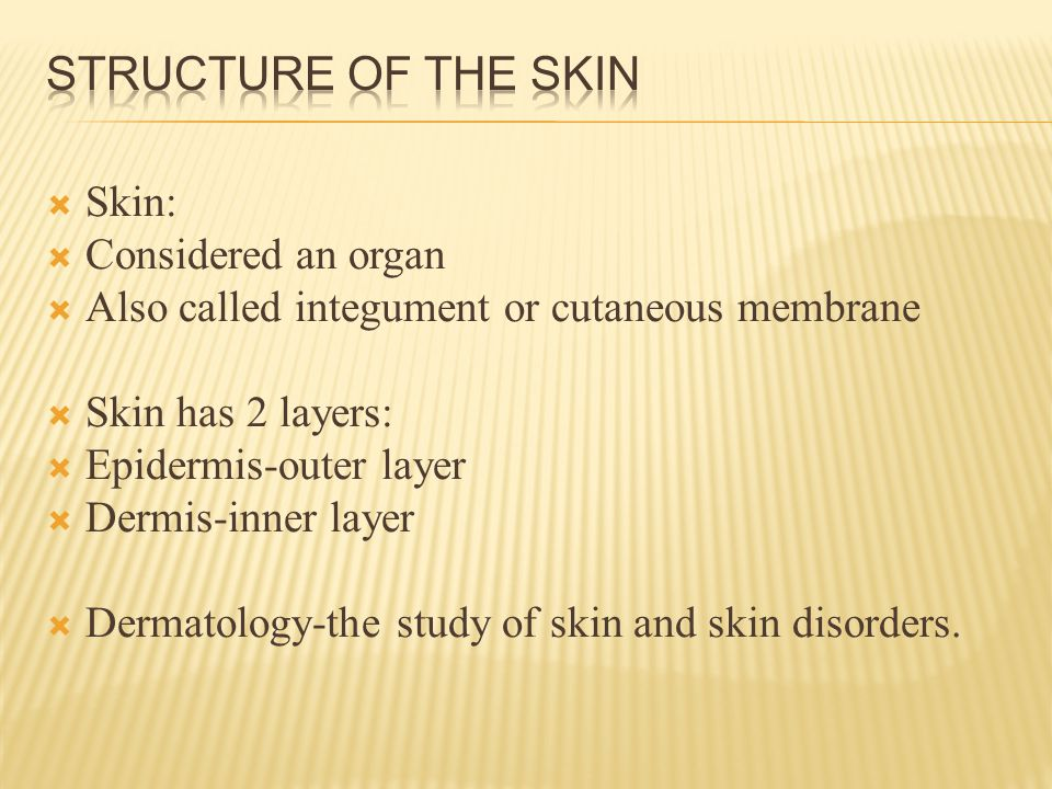 Epidermis-thin outer layer of skin. Composed of stratified squamous epithelium.