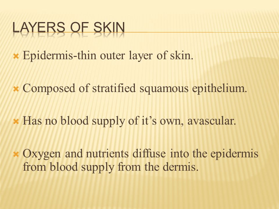  Epidermis-thin outer layer of skin.  Composed of stratified squamous epithelium.