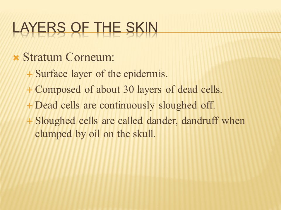  Stratum Corneum:  Surface layer of the epidermis.