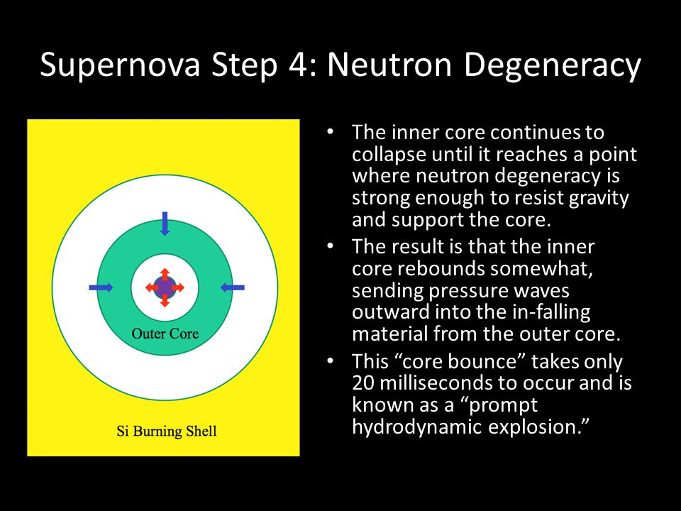 Supernova Step 4: Neutron Degeneracy The inner core continues to collapse until it reaches a point where neutron degeneracy is strong enough to resist gravity and support the core.