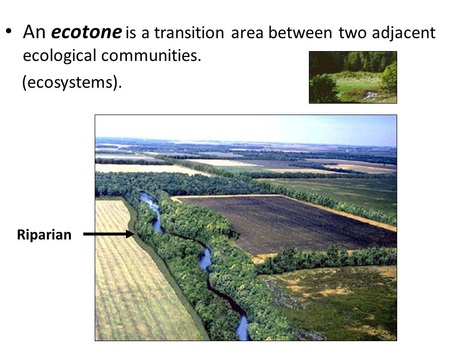 An ecotone is a transition area between two adjacent ecological communities. (ecosystems). Riparian