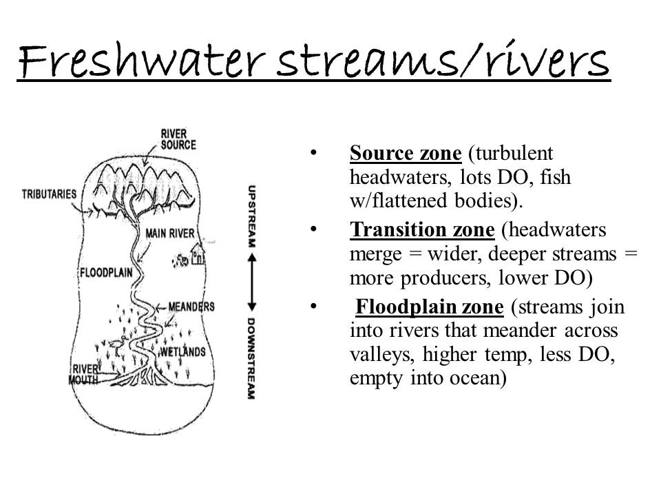 Freshwater streams/rivers Source zone (turbulent headwaters, lots DO, fish w/flattened bodies). Transition zone (headwaters merge = wider, deeper stre