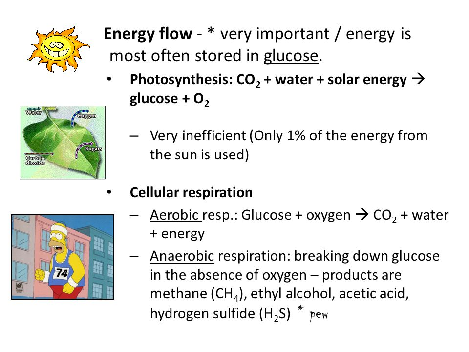 Energy flow - * very important / energy is most often stored in glucose. Photosynthesis: CO 2 + water + solar energy  glucose + O 2 – Very inefficien
