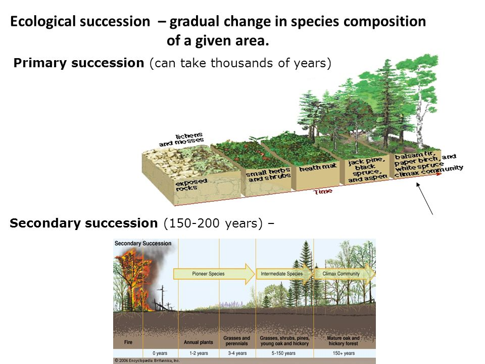 Ecological succession – gradual change in species composition of a given area. Primary succession (can take thousands of years) Secondary succession (