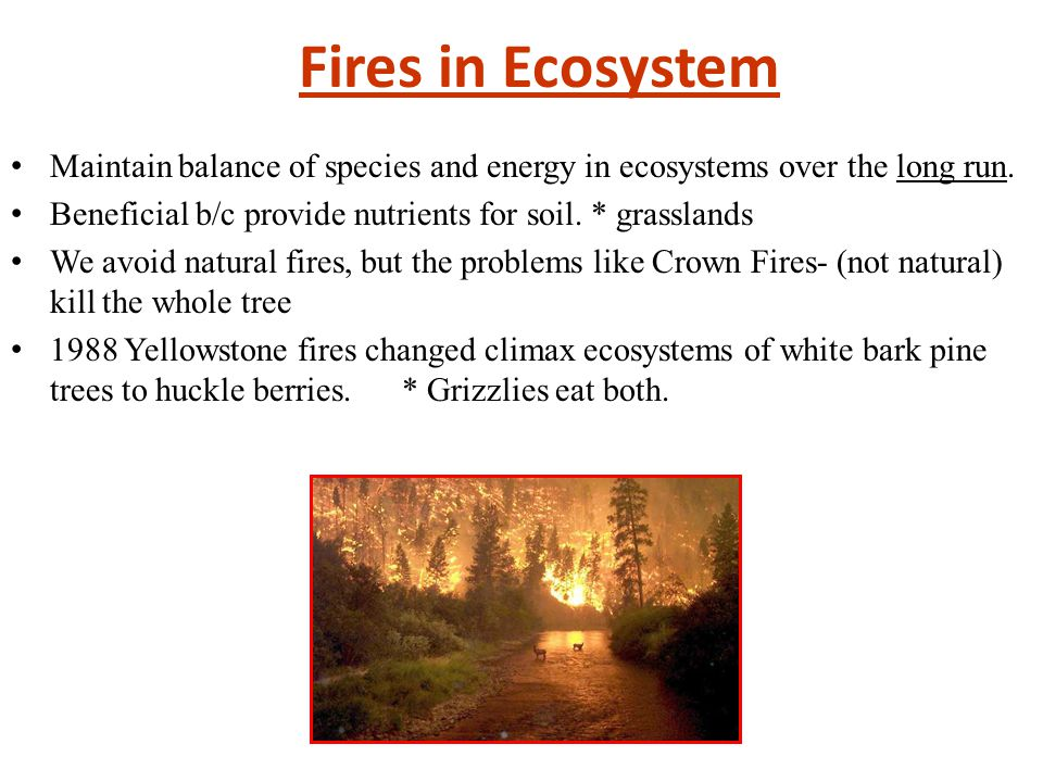 Fires in Ecosystem Maintain balance of species and energy in ecosystems over the long run. Beneficial b/c provide nutrients for soil. * grasslands We