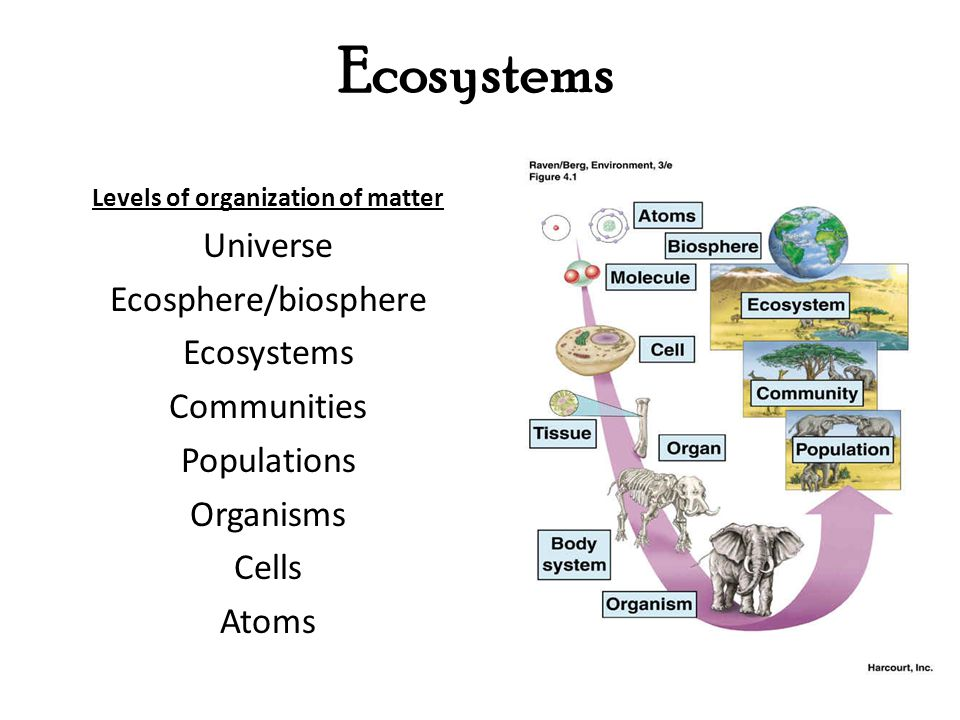 Cambrian Explosion- Life You are here. Geological time scale