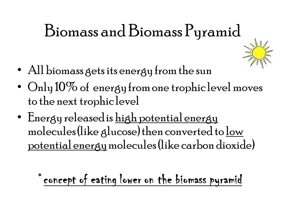 Biomass and Biomass Pyramid All biomass gets its energy from the sun Only 10% of energy from one trophic level moves to the next trophic level Energy