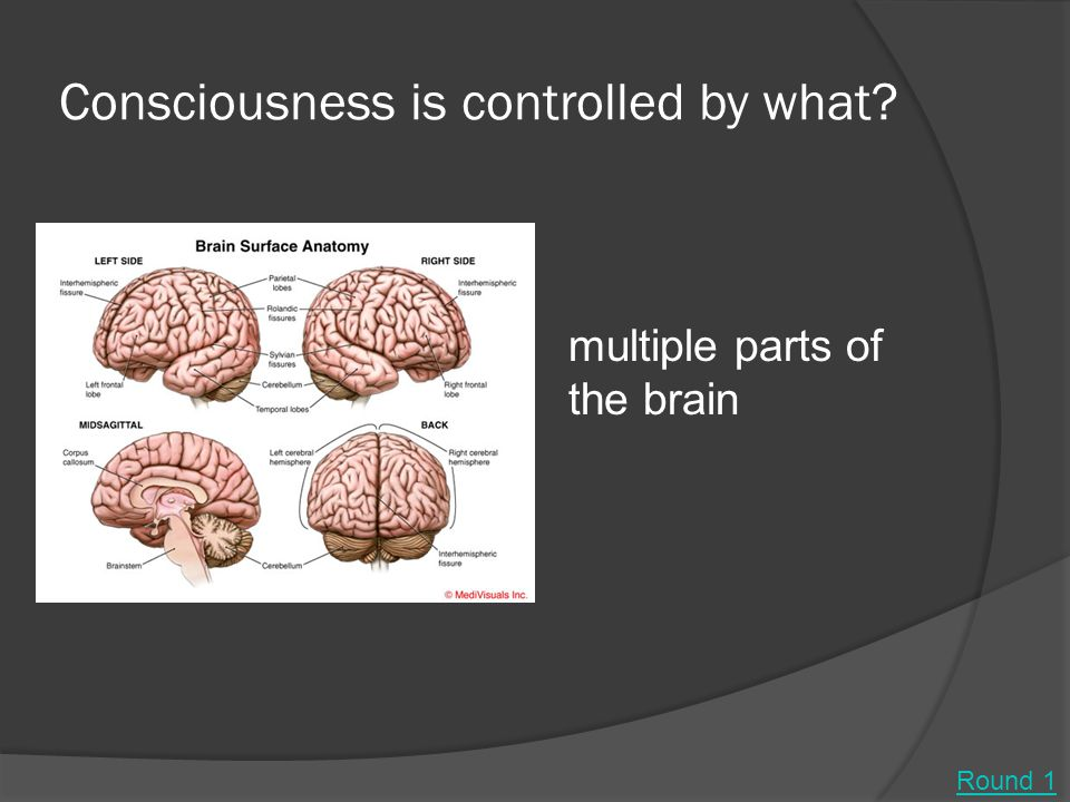 Consciousness is controlled by what? multiple parts of the brain Round 1