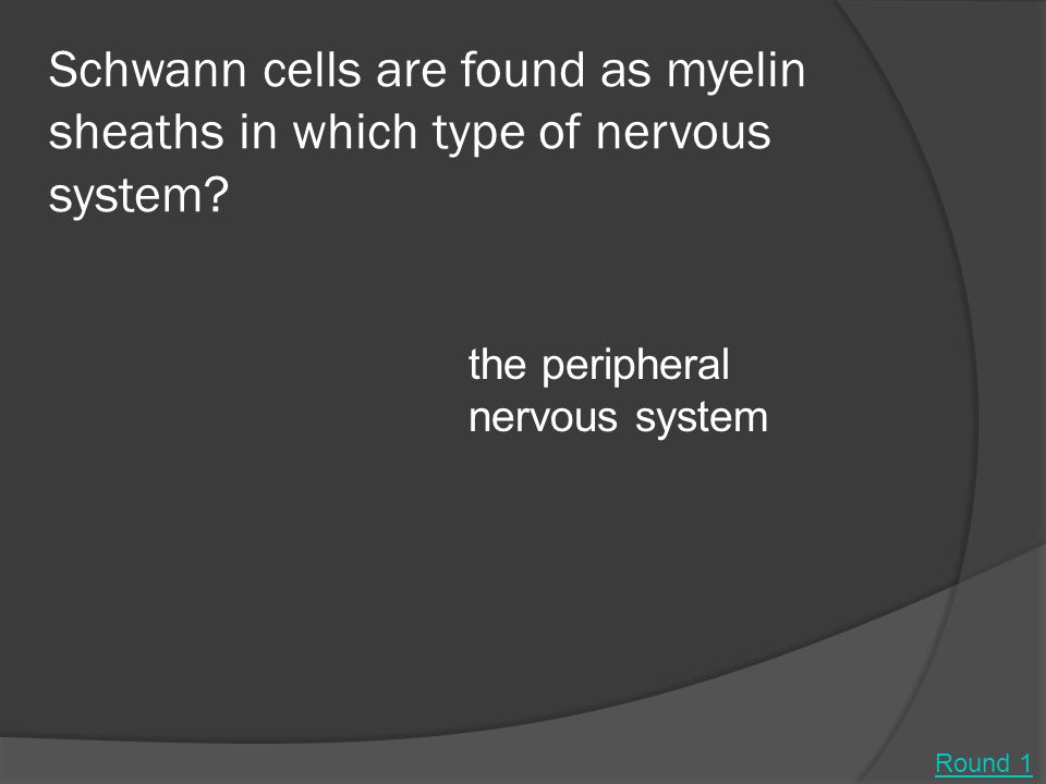 Schwann cells are found as myelin sheaths in which type of nervous system.