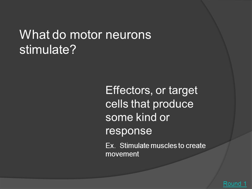 Round 1 What do motor neurons stimulate.