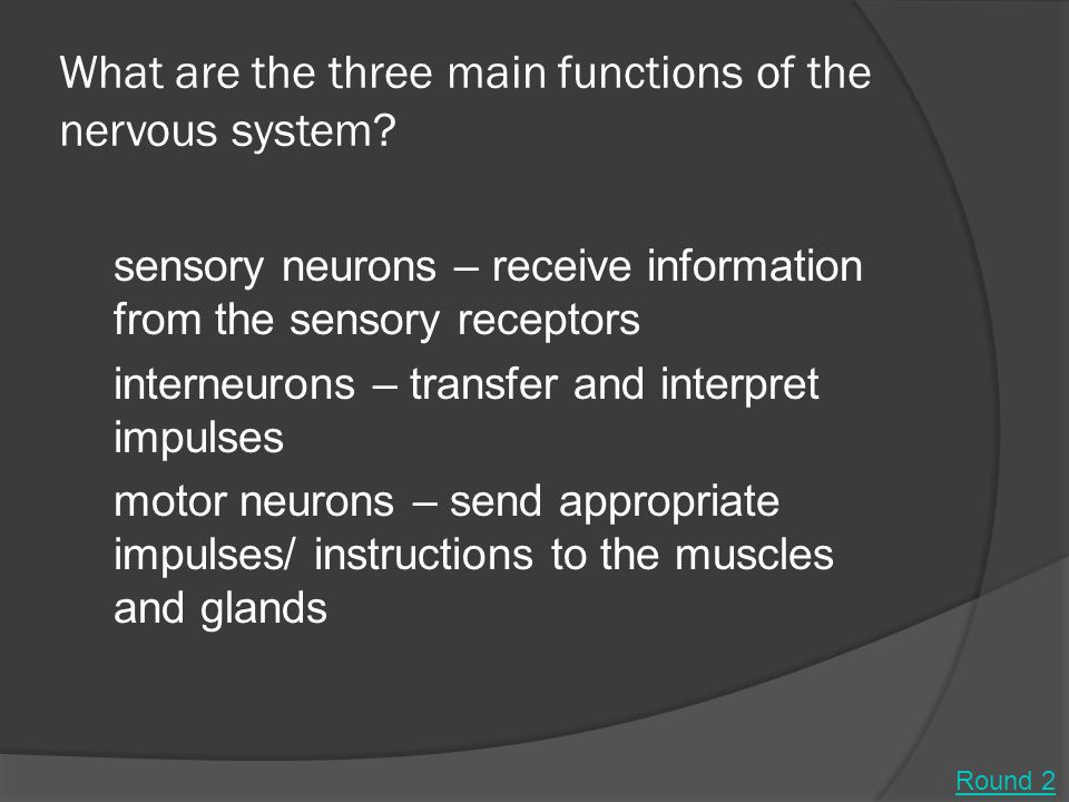 What are the three main functions of the nervous system.