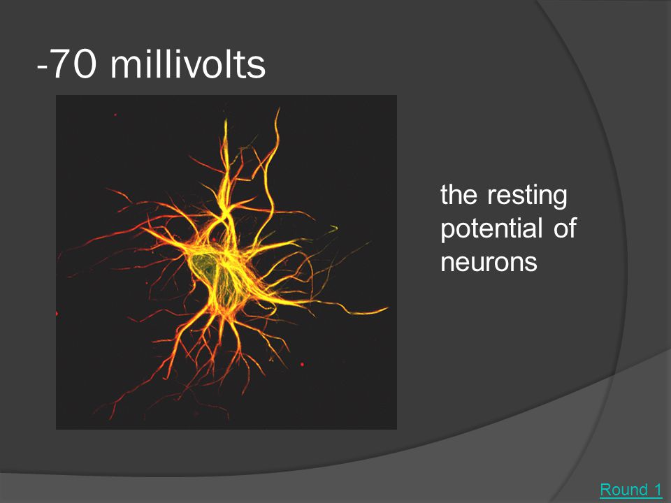 -70 millivolts the resting potential of neurons Round 1
