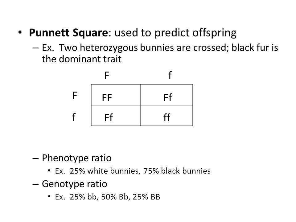 Punnett Square: used to predict offspring – Ex.