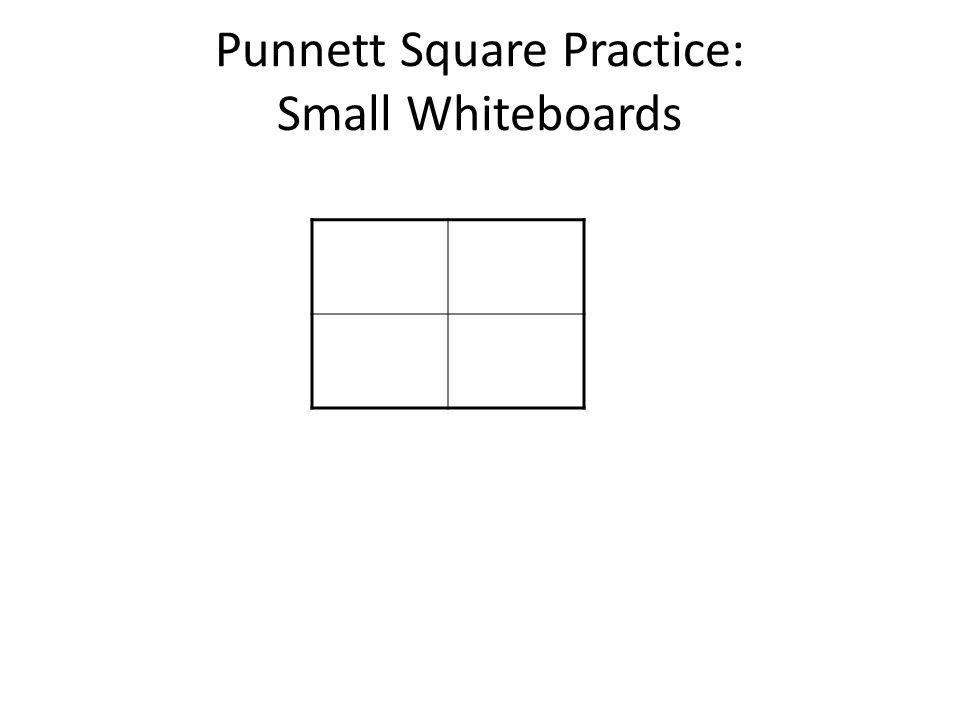 Punnett Square Practice: Small Whiteboards
