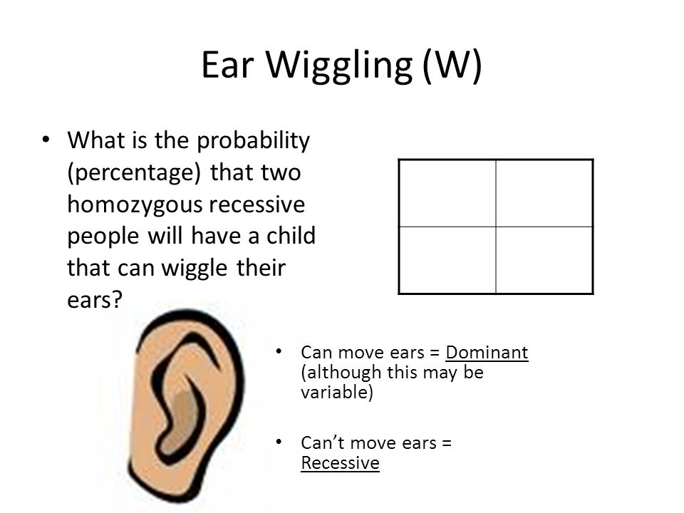 Ear Wiggling (W) What is the probability (percentage) that two homozygous recessive people will have a child that can wiggle their ears.