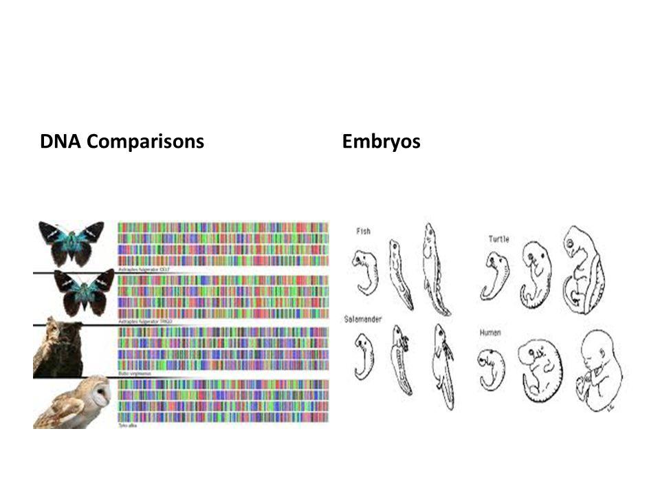 DNA ComparisonsEmbryos
