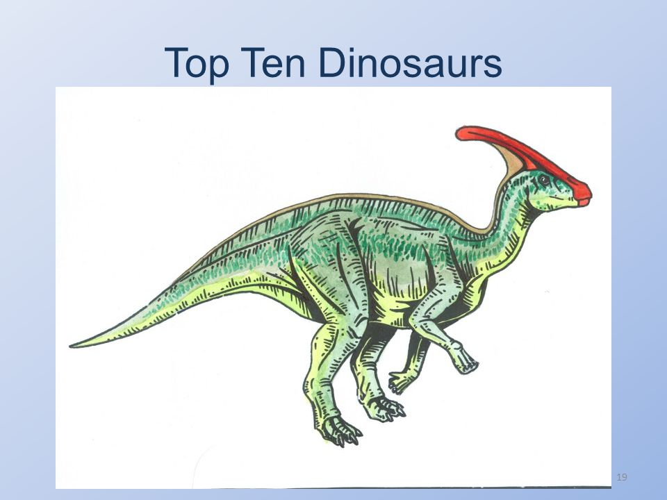 Top Ten Dinosaurs From http://dsc.discovery.com/tv-shows/curiosity/topics/10- greatest-dinosaurs-all-time.htm 10) Parasaurolophus A plant-eating member of the hadrosaur family, also known as the duck-billed dinosaurs, Parasaurolophus main feature was its curved head crest.