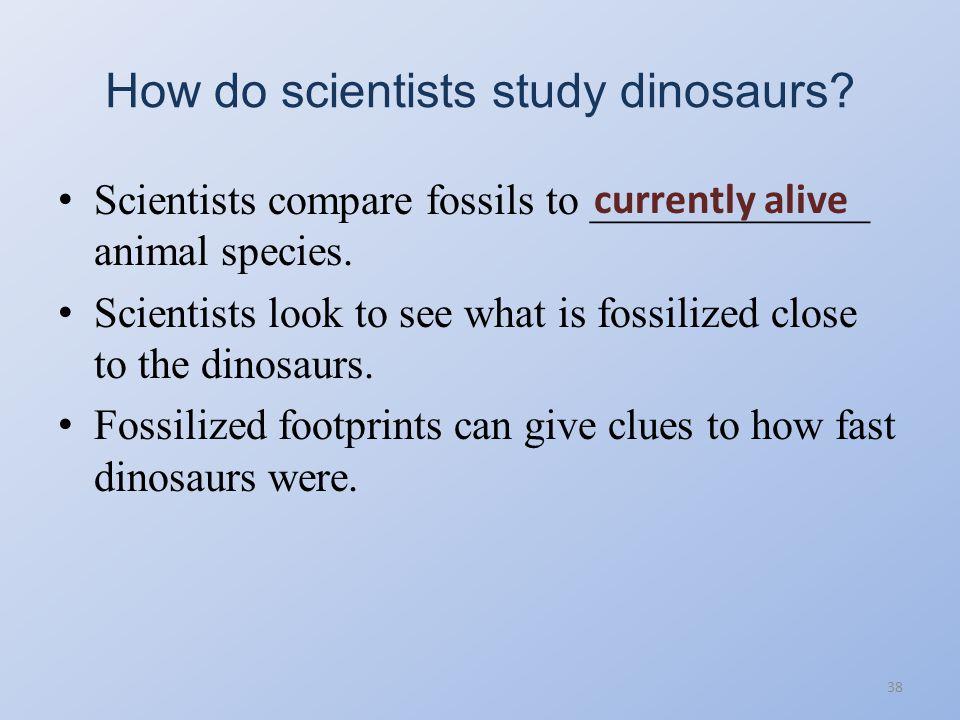 Top Ten Dinosaurs 37