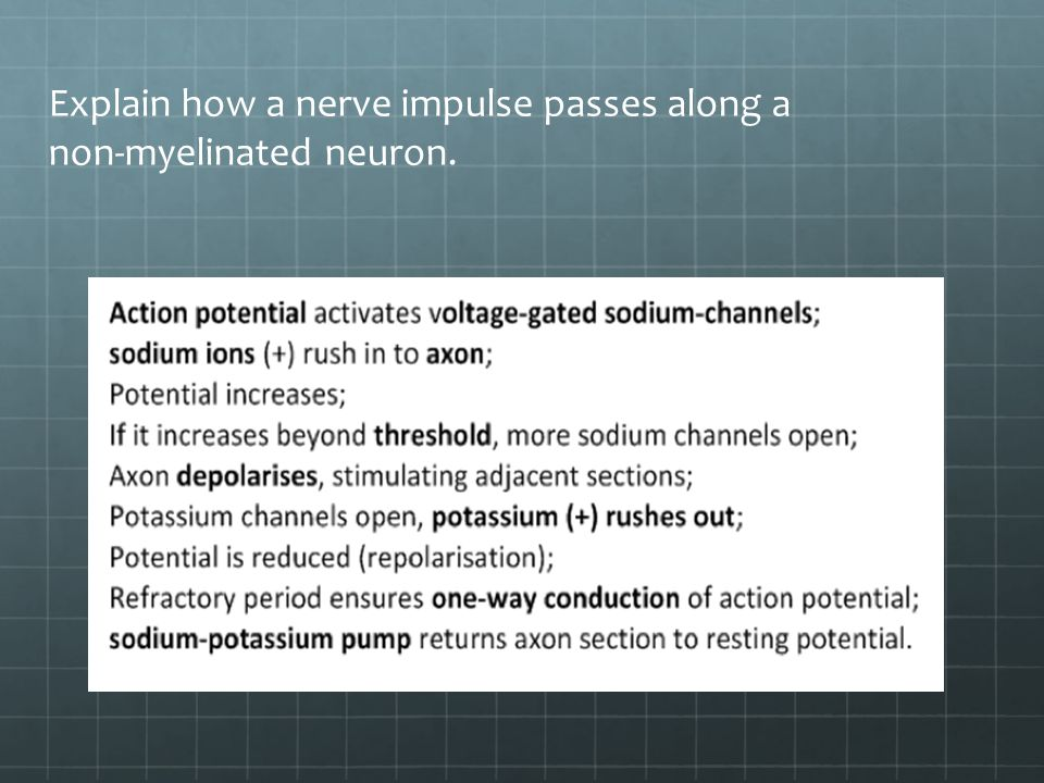 Explain how a nerve impulse passes along a non-myelinated neuron.