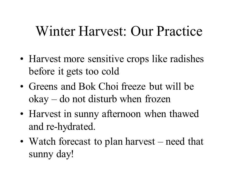 Winter Harvest: Our Practice Harvest more sensitive crops like radishes before it gets too cold Greens and Bok Choi freeze but will be okay – do not disturb when frozen Harvest in sunny afternoon when thawed and re-hydrated.