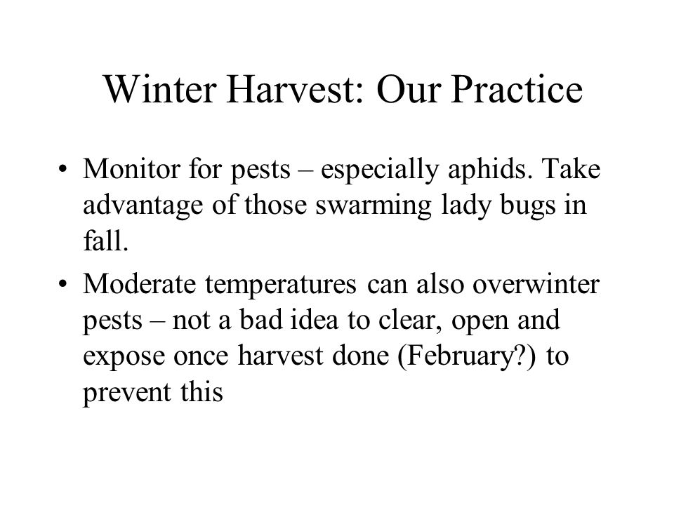 Winter Harvest: Our Practice Monitor for pests – especially aphids.