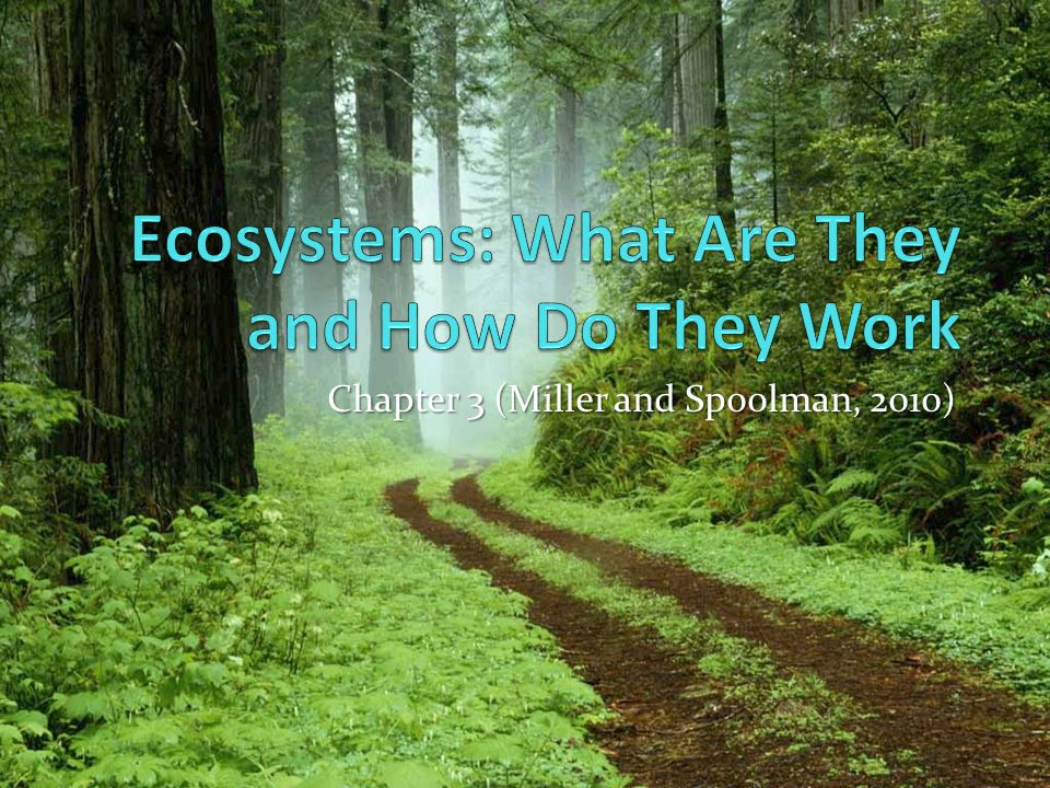 Some Ecosystems Produce Plant Matter Faster Than Others Do (2) Net primary productivity – rate at which producers use photosynthesis to produce and store energy minus the rate at which they use this stored energy for aerobic respiration.