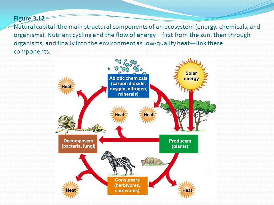 Figure 3.12 Natural capital: the main structural components of an ecosystem (energy, chemicals, and organisms). Nutrient cycling and the flow of energ