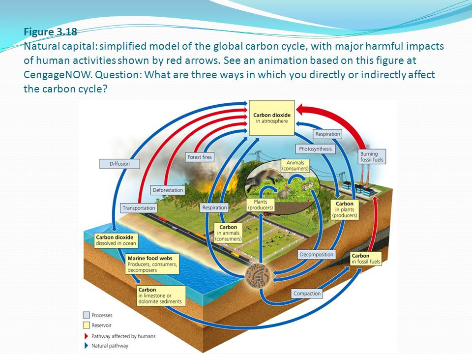 Figure 3.18 Natural capital: simplified model of the global carbon cycle, with major harmful impacts of human activities shown by red arrows. See an a