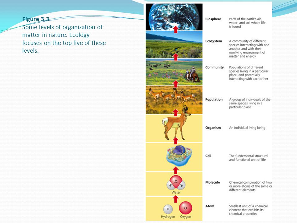 Figure 3.3 Some levels of organization of matter in nature. Ecology focuses on the top five of these levels.