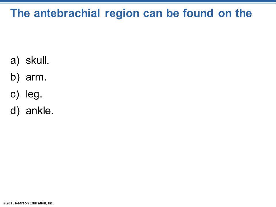© 2015 Pearson Education, Inc. The antebrachial region can be found on the a)skull. b)arm. c)leg. d)ankle.