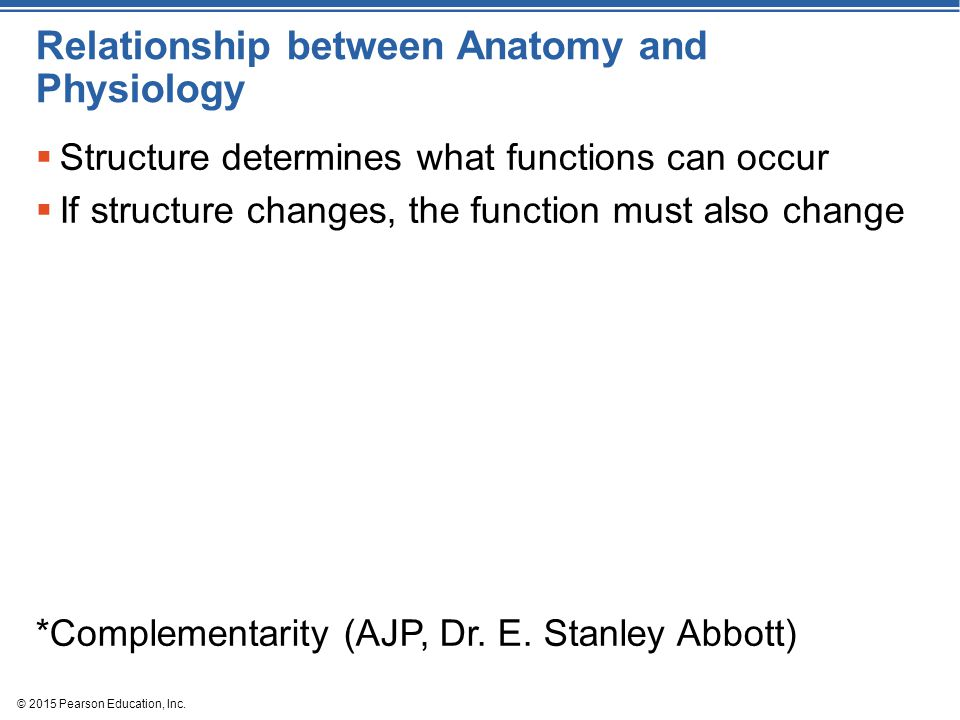 © 2015 Pearson Education, Inc. Relationship between Anatomy and Physiology  Structure determines what functions can occur  If structure changes, the