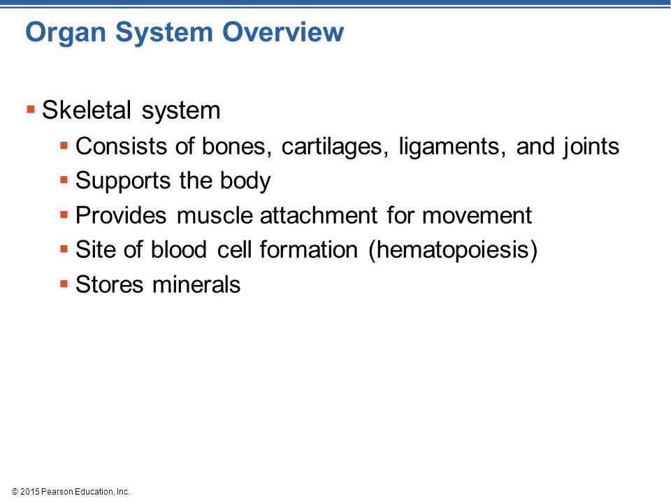 © 2015 Pearson Education, Inc. Organ System Overview  Skeletal system  Consists of bones, cartilages, ligaments, and joints  Supports the body  Pr