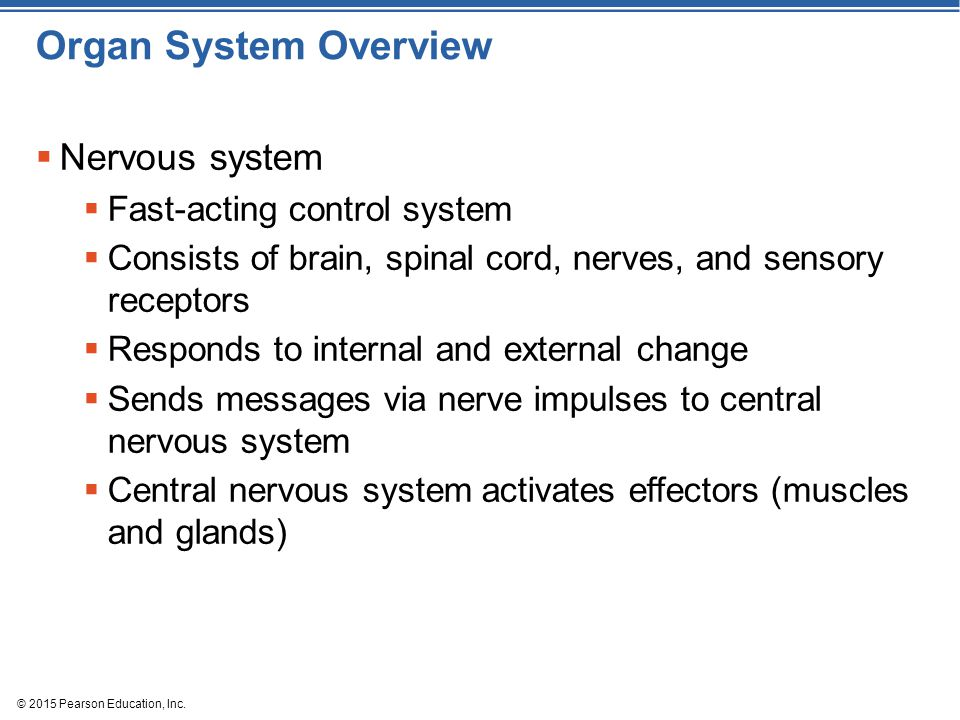 © 2015 Pearson Education, Inc. Organ System Overview  Nervous system  Fast-acting control system  Consists of brain, spinal cord, nerves, and senso