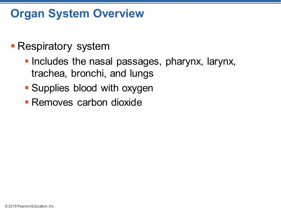 © 2015 Pearson Education, Inc. Organ System Overview  Respiratory system  Includes the nasal passages, pharynx, larynx, trachea, bronchi, and lungs