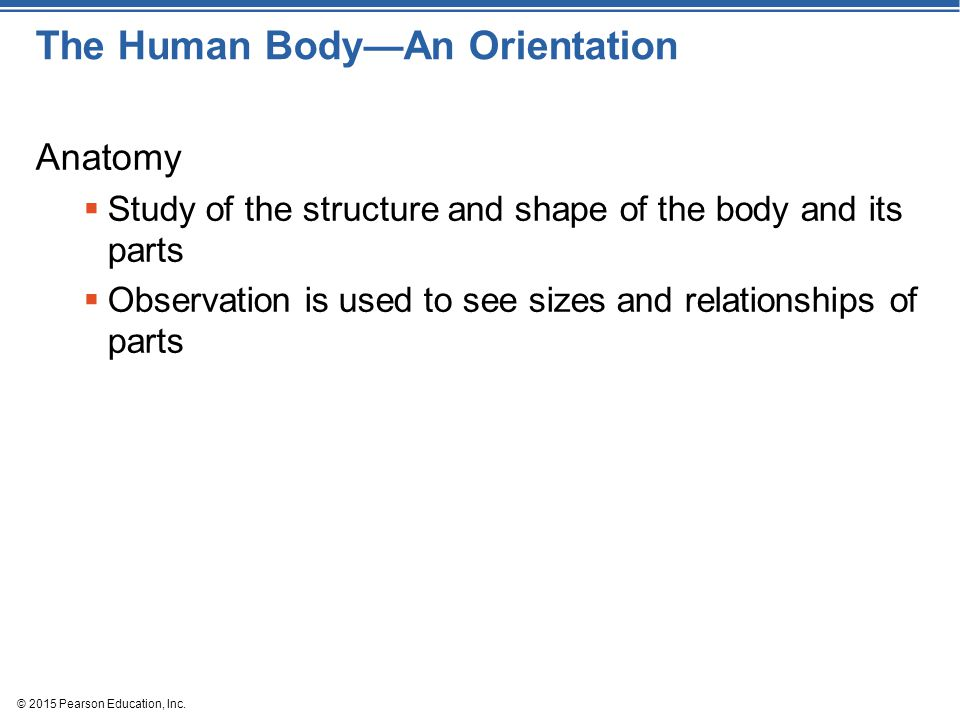 © 2015 Pearson Education, Inc.Figure 1.2j The body's organ systems.