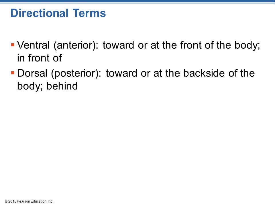 © 2015 Pearson Education, Inc. Directional Terms  Ventral (anterior): toward or at the front of the body; in front of  Dorsal (posterior): toward or