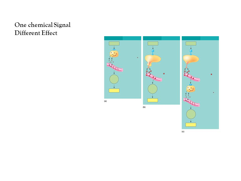 One chemical Signal Different Effect