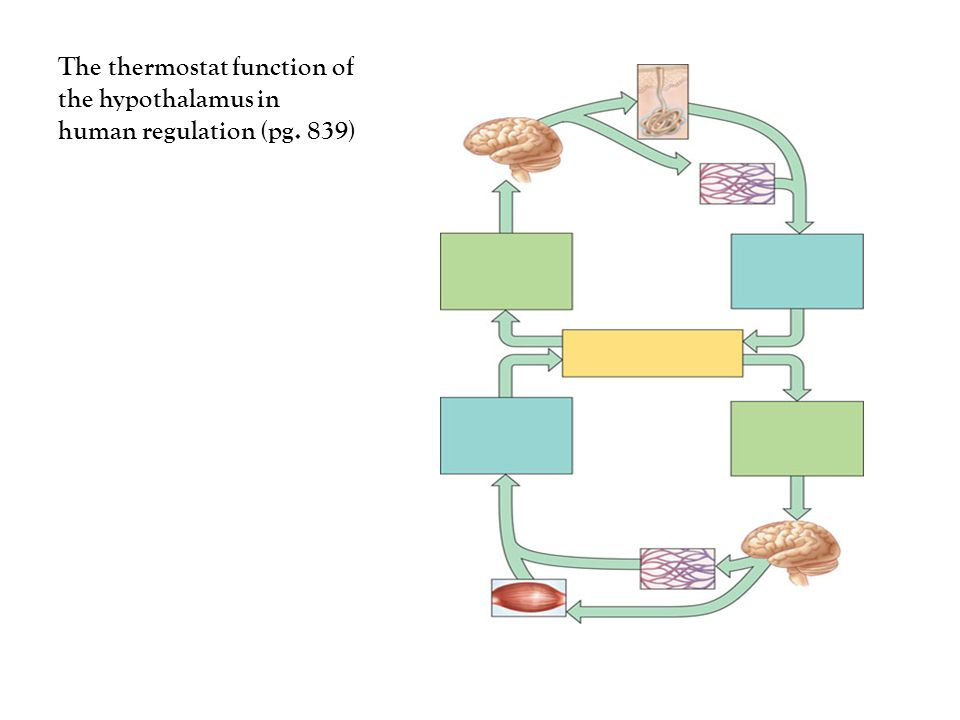 Feed back regulation of T3 and T4 secretion from the thyroid Gland