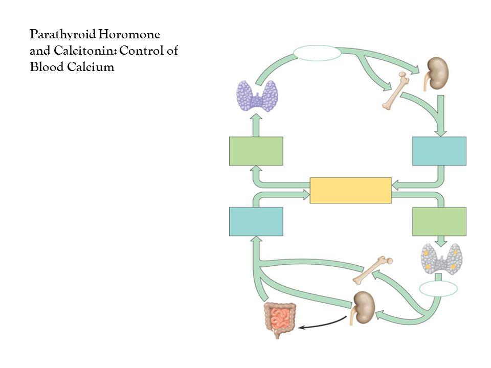 Parathyroid Horomone and Calcitonin: Control of Blood Calcium