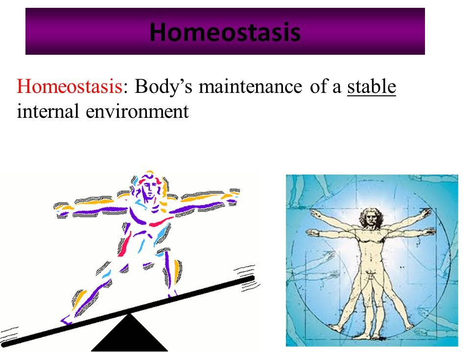 Homeostatic mechanism regulates body temperature Slide number: 4 Copyright © The McGraw-Hill Companies, Inc.