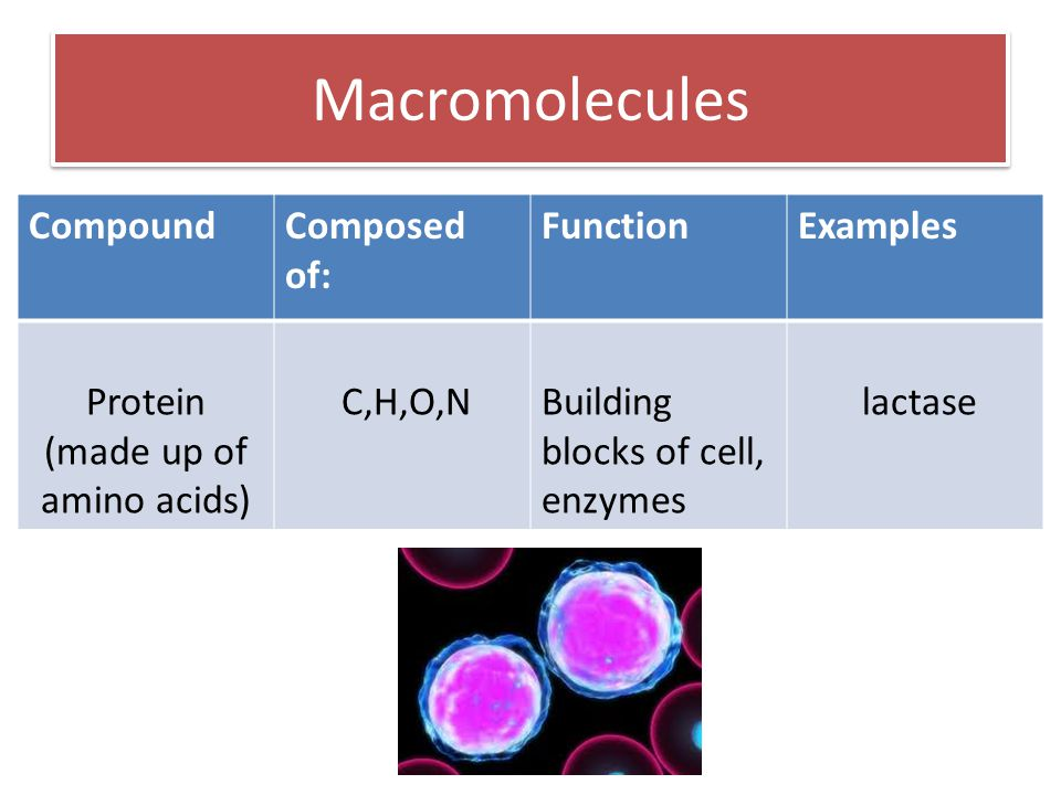 Macromolecules CompoundComposed of: FunctionExamples Protein (made up of amino acids) C,H,O,NBuilding blocks of cell, enzymes lactase