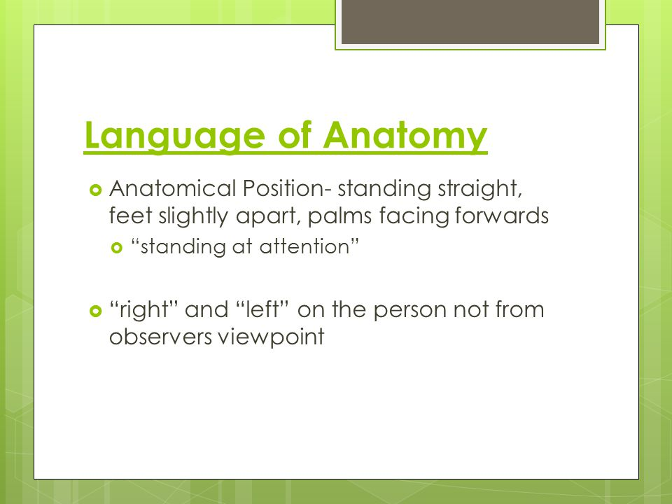 "Language of Anatomy  Anatomical Position- standing straight, feet slightly apart, palms facing forwards  ""standing at attention""  ""right"" and ""left"