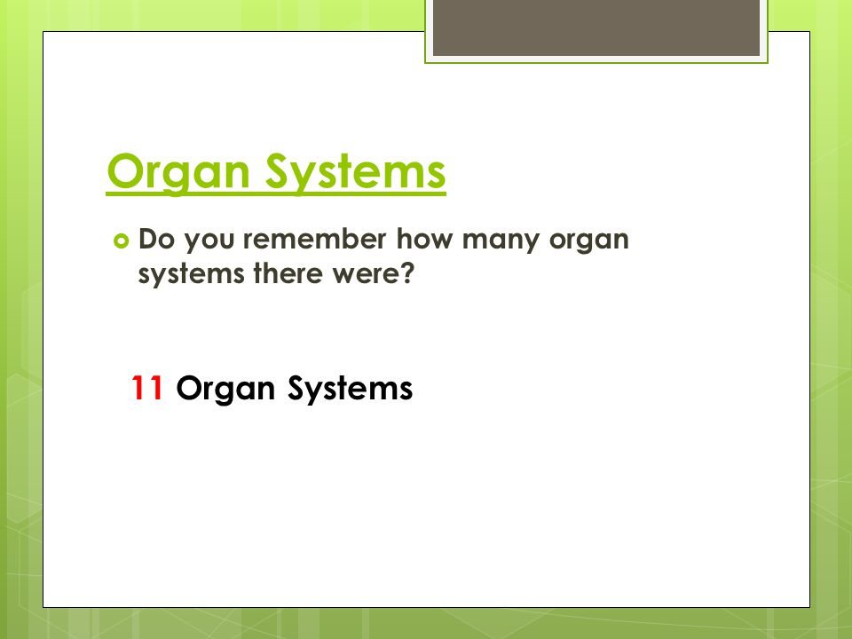 Organ Systems  Do you remember how many organ systems there were? 11 Organ Systems