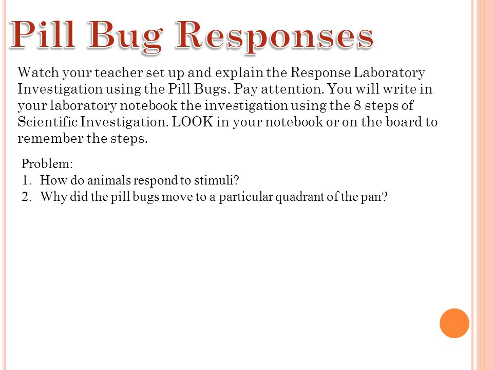 Watch your teacher set up and explain the Response Laboratory Investigation using the Pill Bugs.
