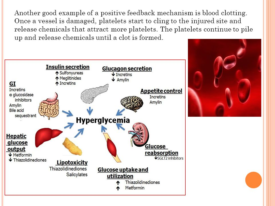 Another good example of a positive feedback mechanism is blood clotting. Once a vessel is damaged, platelets start to cling to the injured site and re