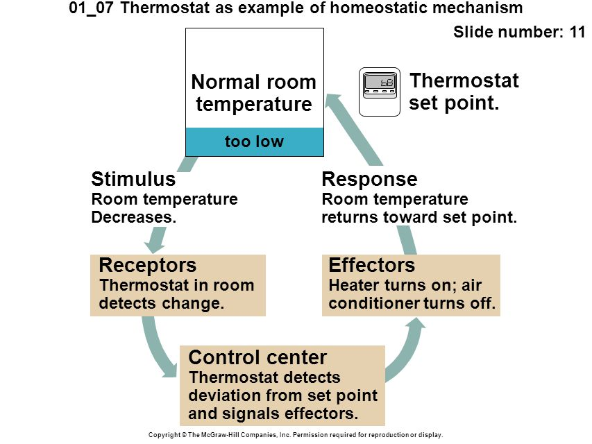 01_07 Thermostat as example of homeostatic mechanism Slide number: 11 Copyright © The McGraw-Hill Companies, Inc. Permission required for reproduction